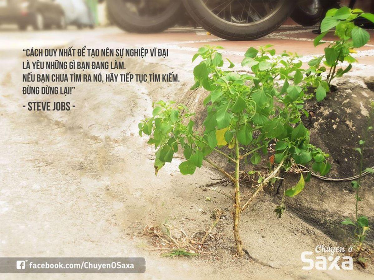 Nhánh cây dại và chúng ta, ai mạnh mẽ hơn?